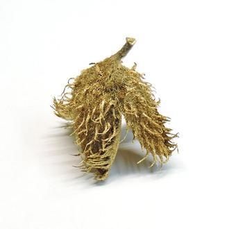 Шишка буковая натуральная золотистая