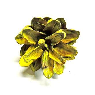 Шишка сосны натуральная желтая