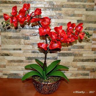 Декоративная орхидея(фалинопсис)