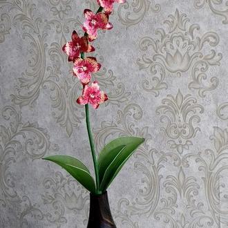 Орхидея Big Band