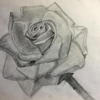 Малюнок роза (графіка)