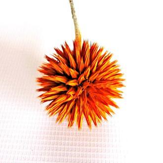 Сухоцвет Ball Lightning окрашенный оранжевый