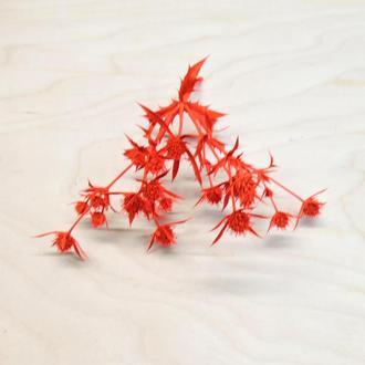 Сухоцвет Camelthorn окрашенный красный