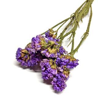 Сухоцвет Limonium фиолетовый