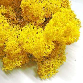 Мох стабилизированный жёлтый