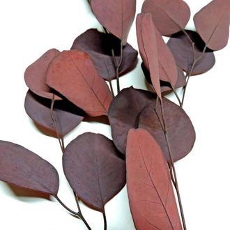 Сухоцвет Eucaliptus пурпурный стабилизированный