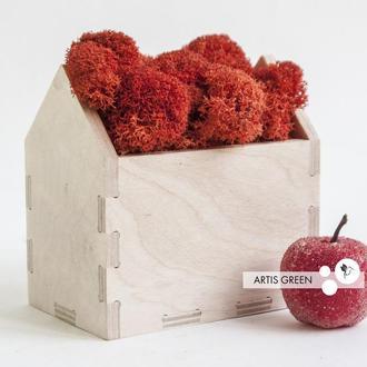 Корпоративный подарок со скандинавским мхом Moss Houses Red