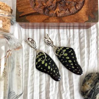 Серьги с крылышками тропической бабочки