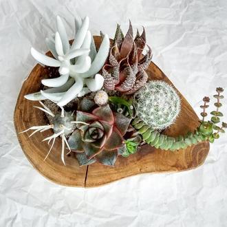 Флорариум в деревянном брусе