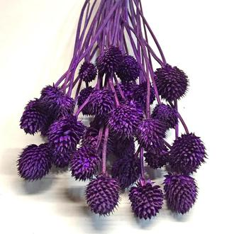 Сухоцвет Escudo фиолетовый