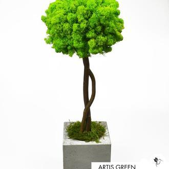 Дерево, топиарий из стабилизированного мха Wasabi, 40 cm