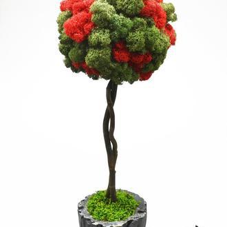 Двокольорове дерево, топіари з стабілізованого моху, 40 cm