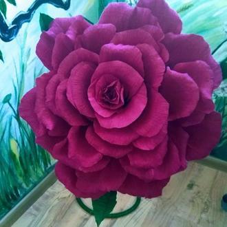 Ростовая бархатная  роза