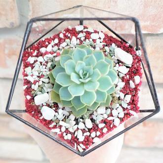 Мини садик. Флорариум с суккулентами Днепр. Живые растения.