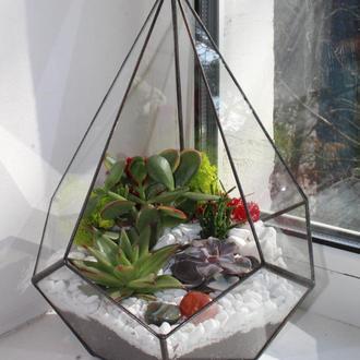 Флорариум геометрический додекаэдр с суккулентами 290Х200