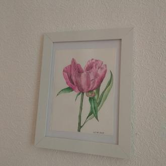 Картина акварелью Розовый пион