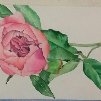 Картина аквареллю Квітка півонії, 22*15 см