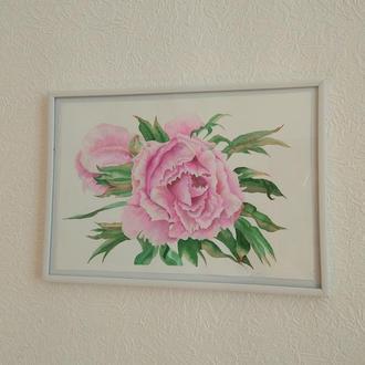 Картина аквареллю Квітка півонії, 28*19см