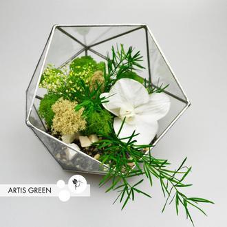 Флорариум со стабилизированной орхидеей и растениями «White orchid»