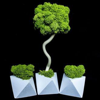 Еко-дерево, топіари з стабілізованого моху. Набір.
