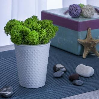 Растительные композиции