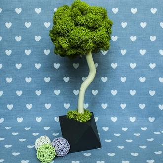 Декоративне дерево, топіари з моху