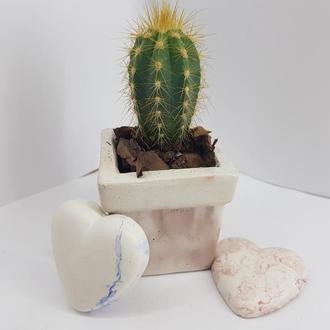 Бетонное кашпо  кашпо для цветов, кашпо для кактусов в стиле Loft