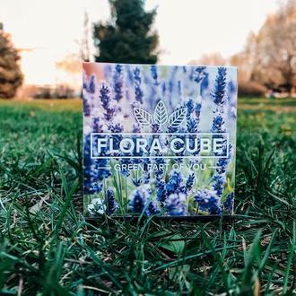 Отличный подарок (сувенир) Flora cube ЛАВАНДА