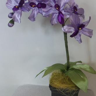 растительная композиция-орхидея