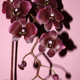 Орхидея Фаленопсис бордо.
