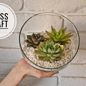 Флорариум ваза с суккулентами