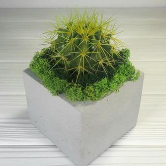 Живой кактус и бетонное кашпо 🌵