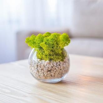 Стеклянный флорариум