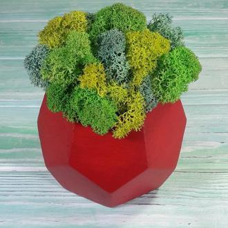 Кольорове кашпо з мохом ❤