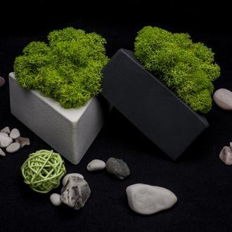 Эко-набор. Стабилизированный мох в кашпо для интерьера. Ягель в горшке