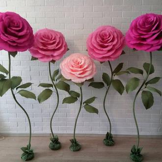 Розы ростовые