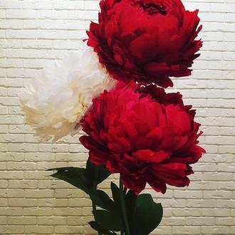 Большие цветы из бумаги. Украшение зала, оформление фотозон. Ростовые цветы из изолона и фоамирана.