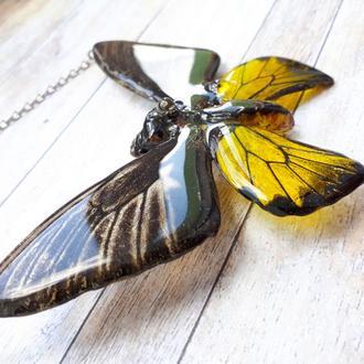 Тропическая бабочка для декора / подвеска с бабочкой / кулон с бабочкой