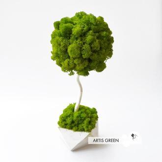 Эко-дерево, топиарий из стабилизированного мха Fresh Wasabi, 30 cm