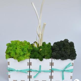 Набор: деревянные кашпо со стабилизированным мхом и растениями, White