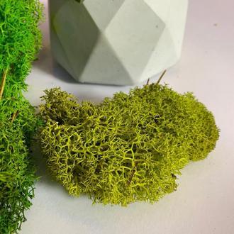 Слабілізований мох
