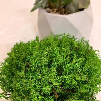 Натуральний стабилизований мох ягель зелений