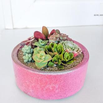 Флорариум в бетонном кашпо Bubble Gum