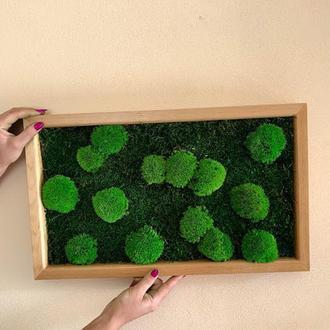 Картини з моху стабілізованого