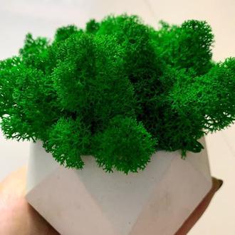 Кашпо з мохом