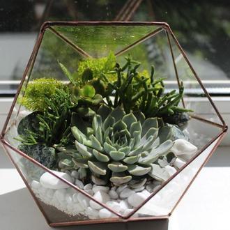 Флорариум геометрический с суккулентми, икосаэдр 160Х180