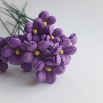 Незабудки фиолетовые