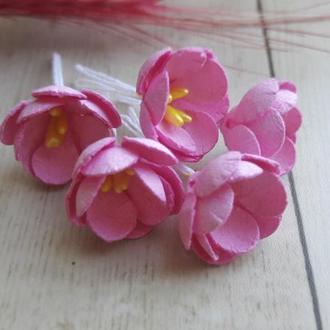 Цветы яблони розовые