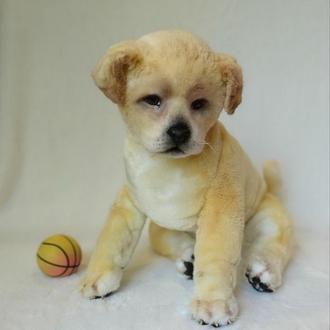 Мягкая игрушка собака.Щенок лабрадора в реальном размере