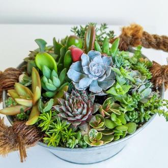 Флорариум в жестяном кашпо Flowers and Garden